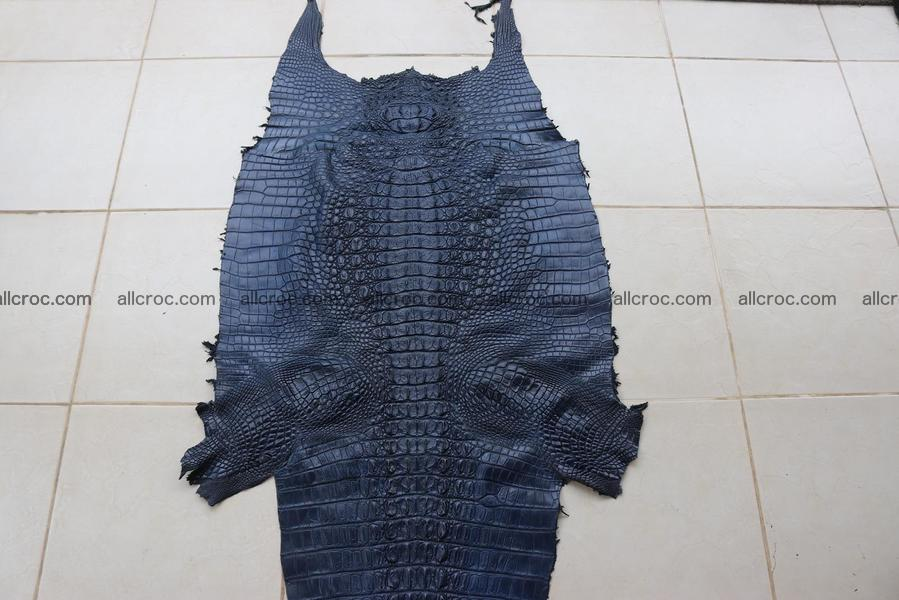 Crocodile skin back part navy blue color 1242