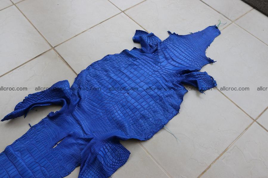 Crocodile skin belly blue color 1256