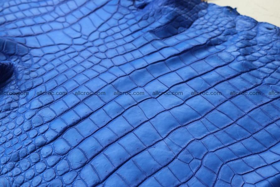 Crocodile skin belly blue color 1255