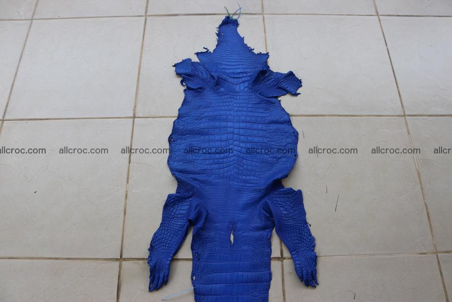 Crocodile skin belly blue color 1257