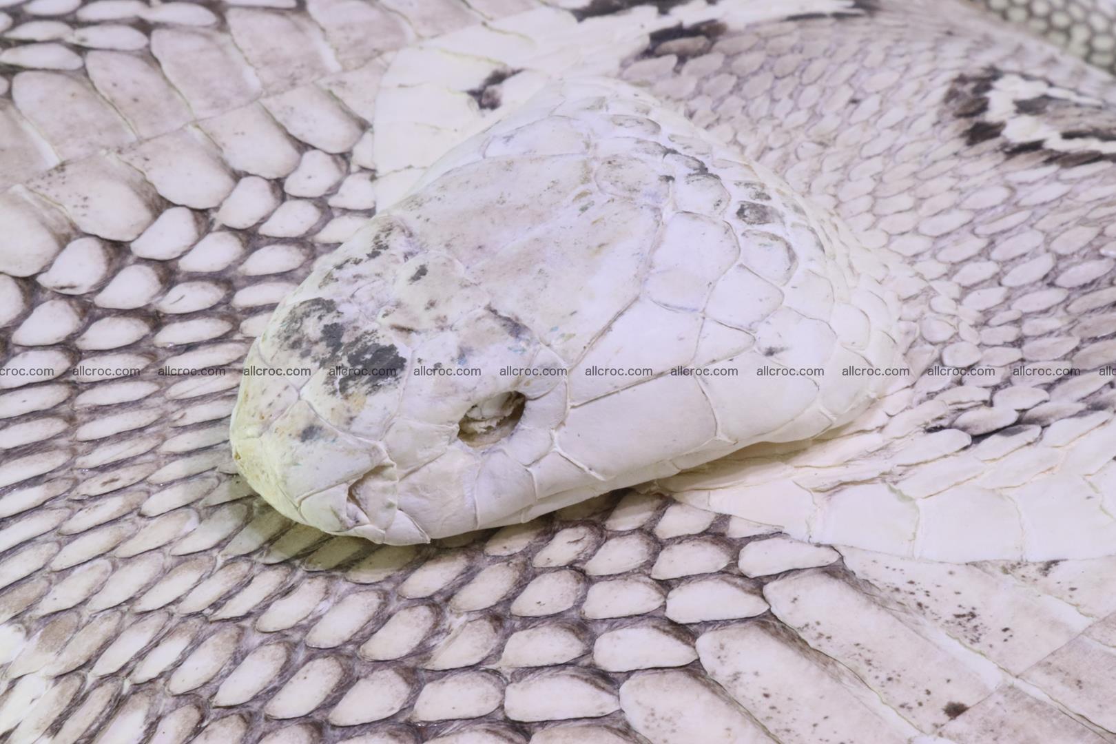 Handbag from cobra skin with head of cobra 170 Foto 7