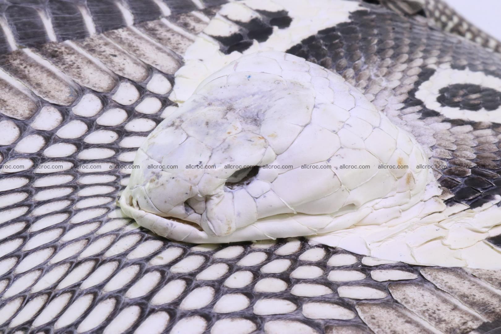 Handbag from cobra skin with head of cobra 171 Foto 4