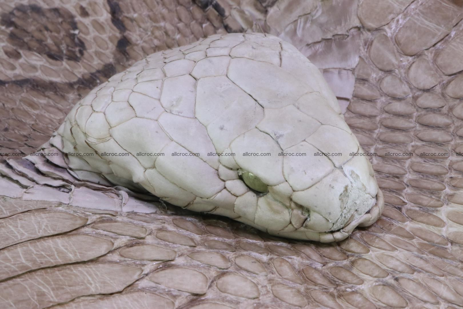 Handbag from cobra skin with head of cobra 174 Foto 9