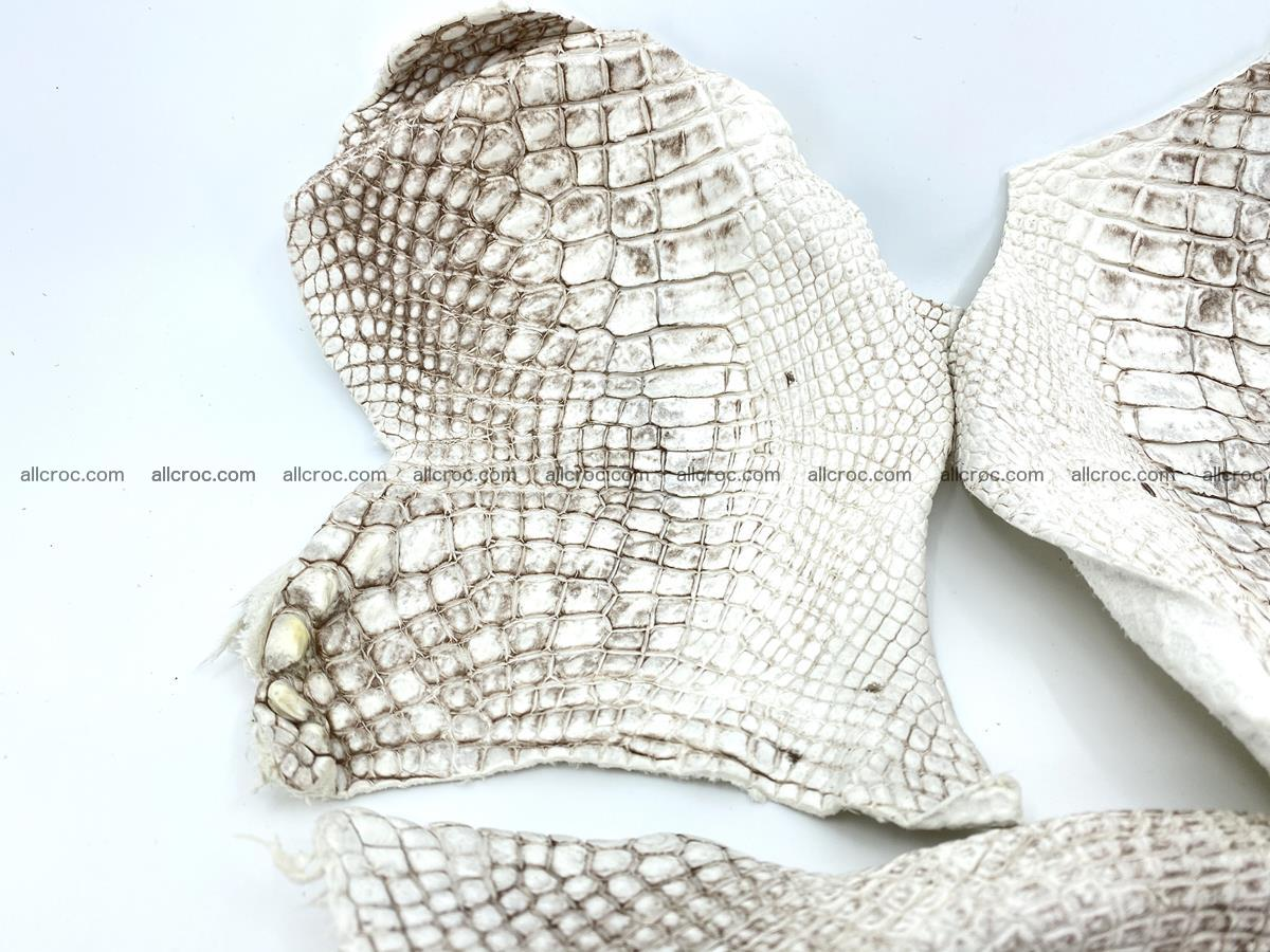 Crocodile leather for handcrafting  834 Foto 1